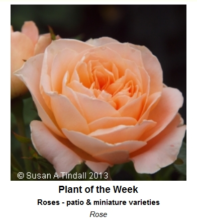 Joy of Plants Plant of the Week